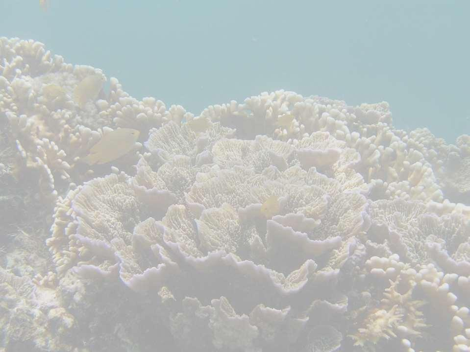 Coral Reef Monitoring in the Philippines HAZEL O.