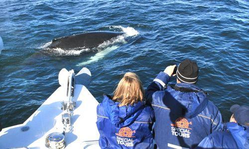 OPTION 2 : CLASSIC WHALE WATCHING TOUR Your whale watching adventure begins at the old harbour, just minutes away from the city centre, on board on one of the largest whale watching boats in Iceland!