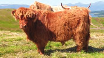 ..154 *Extracts from Impressions of My Fifty Years of Highland Bull Sales, 1964-2014 Acknowledgements The Highland Cattle Society would like to thank the following for their contribution to this new