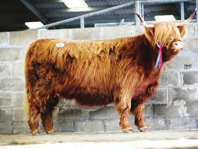 Angus Ruadh stood first in his class, was born on 4 March 2015 and heads to Inverinate Estate for 8000 guineas.