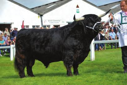 THE SHOW SEASON THE SHOW SEASON Class SP12 Reserve Overall Champion Howman, Mr K C R, Maireared Stuamaig 2nd of Borland, UK542205 100495, S: Stepdancer 3rd Of Glengorm, D: Maireared Buidhe 1st of