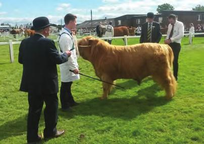 Fold, Banrigh 5th of Hyndford, UK560890 300081, 08/05/2015, S: Alexander Of Glengorm, D: Banrigh of Hyndford GREAT YORKSHIRE SHOW 2016 Tuesday 12th - Thursday 14th July Judge: Mr David Maughan,