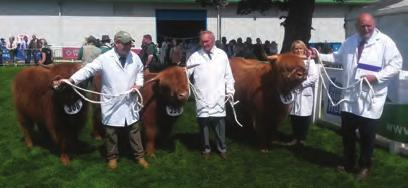 SP14 Best Group consisting of 1 Bull, 1 Cow and Calf, 1 Heifer, all the property of one exhibitor Hyndford Fold, Alisdair 3rd of Douglas, UK560118 500156, 30/03/2015, S: Alisdair of Hyndford, D: