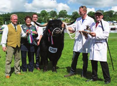 Peter Smith; CAIRISTIONA DUBH OF STOCKLEY UK315256200016; 17 June 2014; bred by Peter & Sue Smith; sire, Caennard Of Miungaligh; dam, Cairisiona Dubh Of Cladich Class 575 BULL, any age Ist & Male