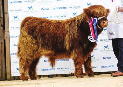 Kayleigh Dixon 4 Logan Ross ROYAL HIGHLAND SHOW 2017 Thursday 22nd June 2017 Judge: Willie Maclean Class 39 Heifers born 16 January to 14 February 2015 1 Lot 228 Dosan 30th of Leys Leys Castle Estate