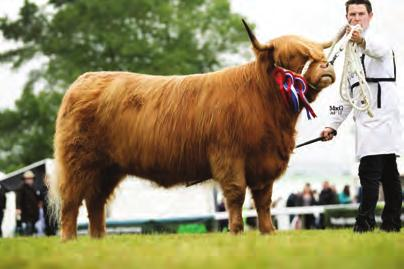 THE SHOW SEASON THE SHOW SEASON 236 BULL born on or before 31st December 2015 (4 Entries) 1st Queen, H M The, Prionnsa Dubh of Craigowmill, UK541989 201527, 10/04/2011, S: Panther 2nd Vom Aignerhof,