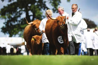 Champion Hyndford Fold, Eachan Ruadh of Hyndford, UK560890 600084, 08/03/2016, S: Alexander of Glengorm, D: Banrigh 3rd of Hyndford, Breeder: Exhibitor Best Junior Animal Hyndford Fold, Eachan Ruadh