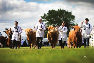 THE SHOW SEASON THE SHOW SEASON Seniors Heifers born in 2014 1st Solas Emma of Blairlogan from Blairlogan Highlanders.