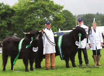 3rd Maserati Black of Hellifield from Messrs R A & W Phillip 4th Leigh Dubh of Hellifield from Stephen & Lesley Burnett bred by Messrs R A & W Phillip Heifer born 2015 and winner of SP12 1st