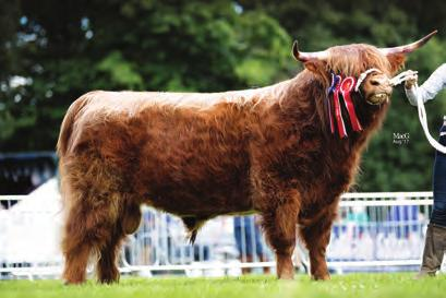 2nd Ms M J & V M Monk; JAMES DUBH OF CHADWICH UK301858301277; 09 Apr 2015; bred by Exhibitor; sire, George Broderick Of House Of Hoden; dam, Turfrida 26th Of Eastol Moor 3rd Mr & Mrs Duncan & Angela