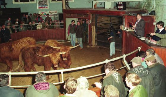 END OF AN ERA Extract from Impressions of My Fifty Years of Highland Bull Sales, 1964-2014 A tradition, which had lasted well over one hundred years, was drawn to a close at the bull sale on the
