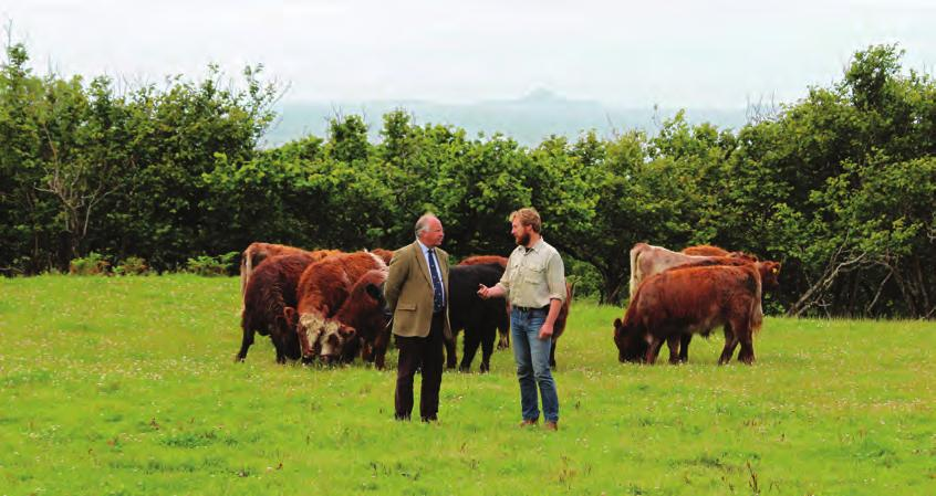 WATSONS SEEDS The Highland Cattle breed holds a unique place in our livestock industry writes Johnny Watson of Watson Seeds.