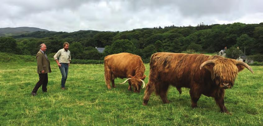 A recent visit to the Inner Hebridean island of Mull to call on two of my clients highlighted an optimistic future for the breed and the outstanding quality of the beef produced from a grass and