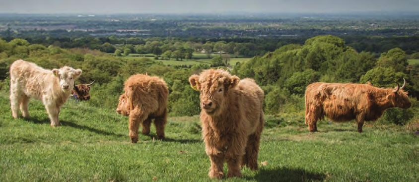 Grazing will increase biodiversity and maintain the open views, ensuring that wildlife and people can enjoy the park for centuries to come which, as a conservation charity is at the heart of