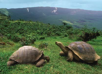 PRSRT STD U.S. Postage PAID Gohagan & Company In 1570, the islands were named galápagos, meaning tortoise, based on sailors descriptions of their inhabitants.