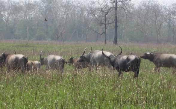Mapping of Kaziranga Conservation Area, Assam - PDF
