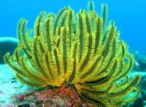 Coral Reefs in the