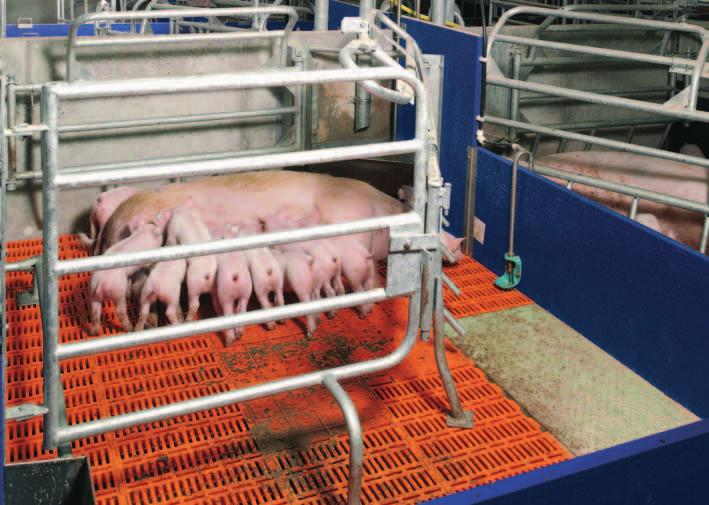 The front part of the cover can Pen with 4-foot crate and cast iron slat beneath the sow and integrated plastic heating plate for the piglets 4-foot crate with cast iron slat beneath the sow and