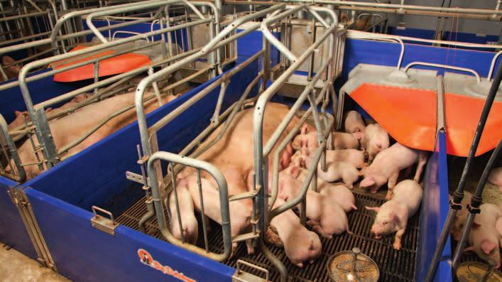 It can be cleaned easily and can be combined with solid plates, cast iron slats and heating plates for pig - lets. Depending on the housing concept the crates can be arranged straight or diagonal.