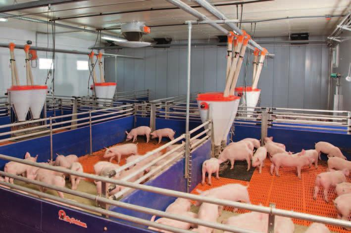 Piglet rearing Housing and feeding systems Big Dutchman piglet rearing pens are equipped either completely or partially with our animal-friendly and anti-slip plastic
