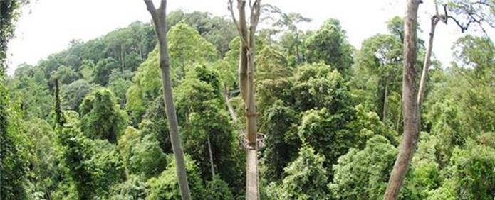 5 LOCATION: DANUM VALLEY IN: 24 APRIL OUT: 27 APRIL The Danum Valley conservation area protects some of the last remaining pristine lowland rainforest on the island.