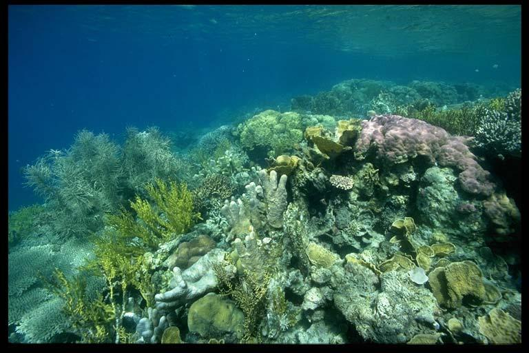 Around 500 of almost 800 known coral species in the world is found in the Philippines