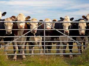 Livestock Animal welfare legislation & livestock transport The Australian Animal Welfare Standards for the Land Transport of Livestock (the Standards) define specific requirements in relation to