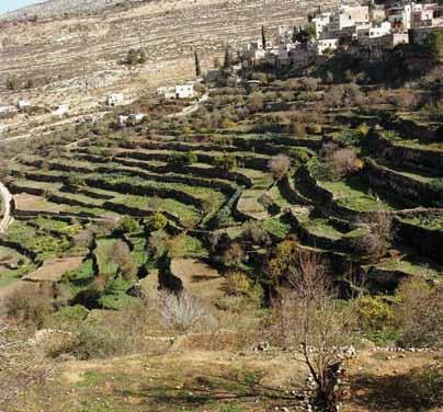 Battir Cultural Landscape wins the Melina Mercouri International Prize for the Safeguarding and Management of Cultural Landscapes By Giovanni Fontana Antonelli The terrace landscape of Battir.