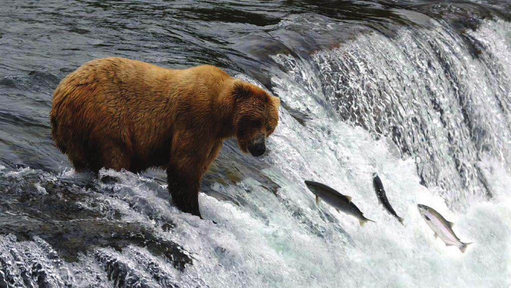 Trip Add-Ons Do you dream of dipping your toe in the Arctic Ocean? Would you like to witness bears in the wild fishing for salmon?