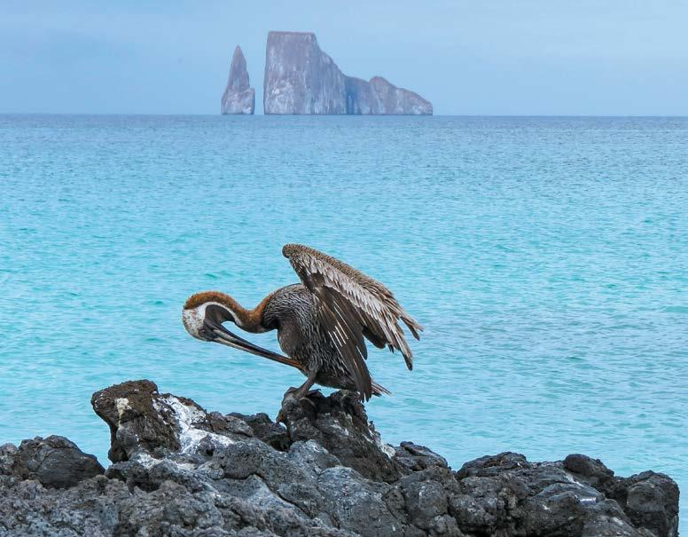 GALAPAGOS ISLANDS GALAPAGOS ISLANDS (ECUADOR) from Quito Kicker Rock view from Isla San Cristobal, Ecuador Classic Galapagos Southern Islands 10 Days Day 1 Quito Welcome to Quito, Ecuador s