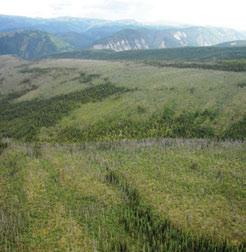3.7.8 Liard Plateau HBbs Ecoregion Rolling till-blanketed hills underlain by dark gray erodible shales and forested by dark green boreal spruce and lodgepole pine woodlands interspersed with