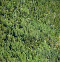 3.7.8 Liard Plateau HBbs Ecoregion Lodgepole pine and trembling aspen are both characteristic species of lower-elevation areas