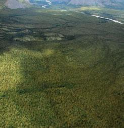 Figure 8. Treeless Arctic plateaus and plains lie north of the Tundra Cordillera, where there are scattered trees in the valleys.