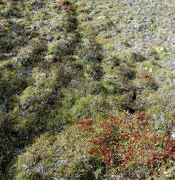 3.5.2 Shattered Range HSas Ecoregion Alpine tundra occupies pockets of moist, finer-textured soils between bouldery talus, and includes sedges, low