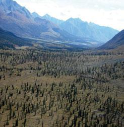 3.6.5 Sayunei-Sekwi Ranges LSas Ecoregion Valley bottoms at the northern end of the Sayunei-Sekwi Ranges LSas Ecoregion, at about 1200 masl, are forested by open, stunted spruce-moss woodlands that