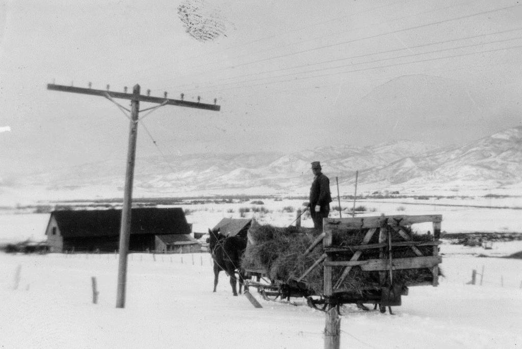 LOUIS SUMMER A Routt County Pioneer Louis Summer feeds cattle using a horse drawn sleigh during a Yampa Valley winter. Photo courtesy Tread of Pioneers Museum.