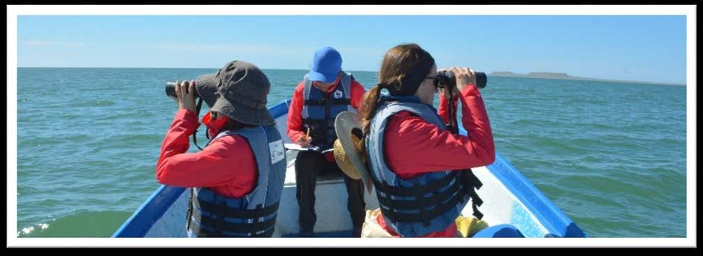 Gray Whale Abundance Monitoring Each winter boat (panga) surveys are used to monitor of gray whale abundance, distribution and reproduction in Laguna San Ignacio and Bahía Magdalena.