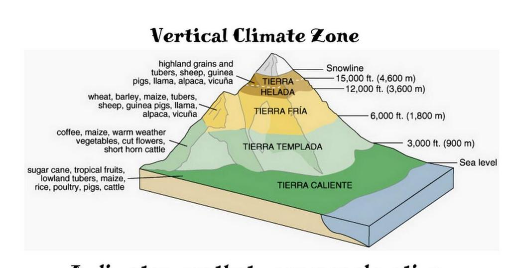 Where is the coldest, wettest climate found in a vertical climate zone?