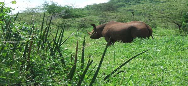 SUCCESS STORIES Development of the Ecolodge Introduction of black rhino after