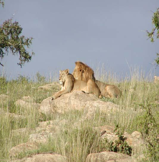CHALLENGES Human wildlife conflict Tourism marketing Population growth Conflict between the old &