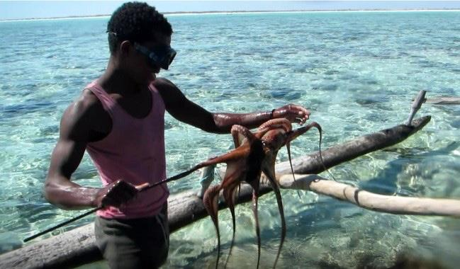 Reopening of the octopus reserve Since 2008, the Wildlife Conservation Society has been supporting the Soariake MPA in SW Madagascar with the aim of protecting the site s biological, ecological and