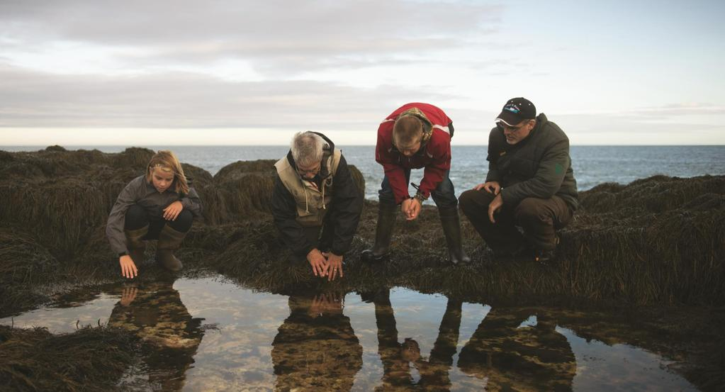 GAEL TOURS Digby, Bay of Fundy PREDATORS, PLANKTON AND PERIWINKLES TOUR