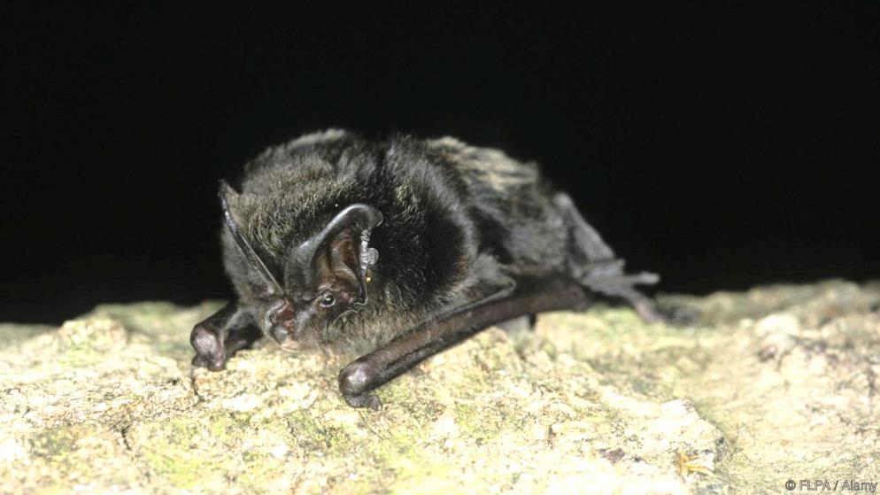 From dusk til dawn on 28 th to 31 st July we recorded the calls of passing bats on equipment loaned by the BTO and then passed the recorded data back to their experts for analysis.