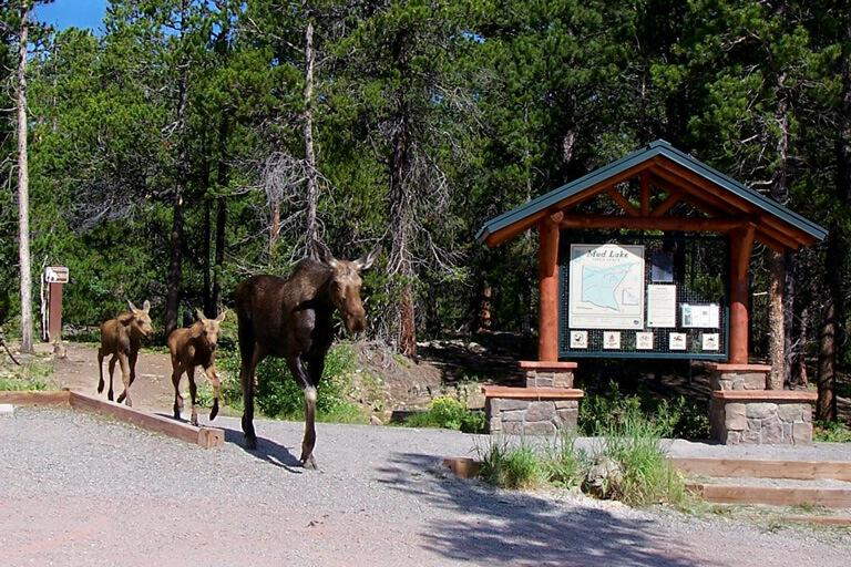 Hike Mud Lake & Visit the Wild Bear Nature Center Go Fishing Go on an Evening Bat Hunt is one of the highest elevation parks in Boulder County and is located at the base of the Indian Peaks