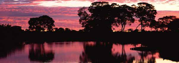 INCLUDED 8 nights of hotel accommodations 8 breakfasts, 7 lunches and 8 dinners Charter flight from southern to northern Pantanal on 7/24 Gratuities to guides, drivers and porters for all group