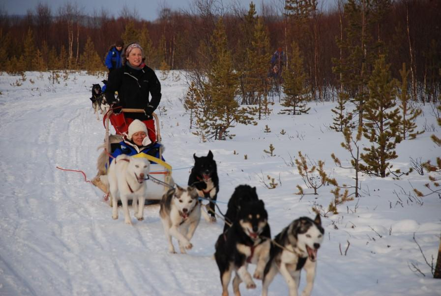 You get warm clothing and will be taken to your husky team where you will get a short lesson on how to handle the dogs and your sledge. There are 2 people per sledge, one driver and one passenger.