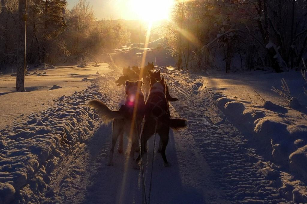 WINTER 2017-18: DEC-APRIL Dog sledding and Pasvik guesthouse (KP06) ACTIVITY: DOG SLEDDING TOUR AND HUNTING FOR THE NORTHERN LIGHTS incl dinner 17.00-22.00. Pick up at hotel.