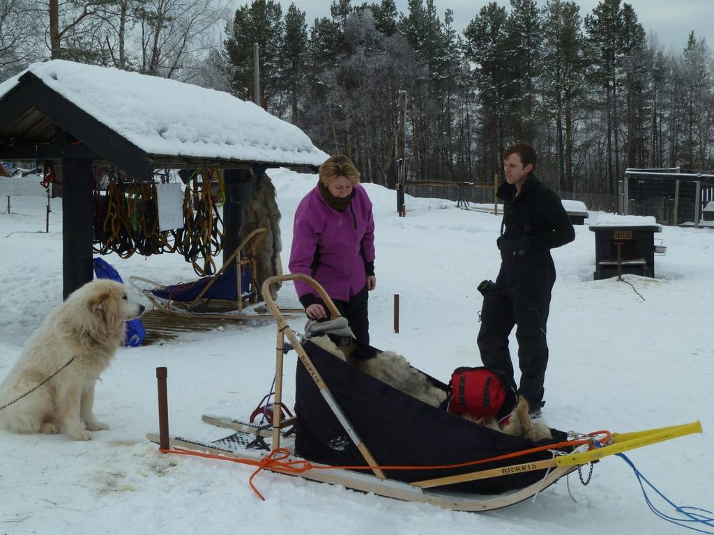 Tour by dog sledges along the Norwegian- Russian border and into the Siberian forest. You drive you own dog sledge (2 persons per sledge). Driving distance is app.