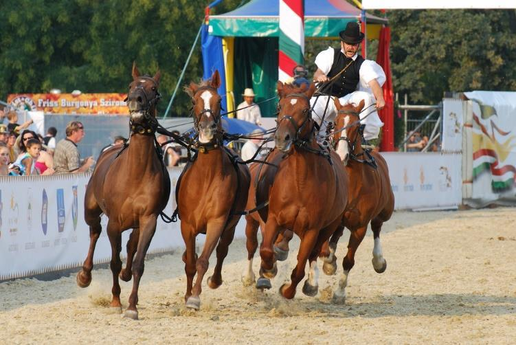 Puszta five: Legendary Hungarian horse show - included in the programme at Lazar Equestrian Park Insurance It is the participant s own responsibility to have personal and travel insurance.