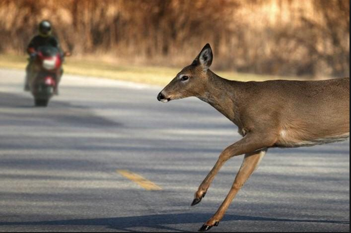 The Continuing Deer Strike Saga By Mark Murray In my article last year, I told you the story of my horrific encounter with a deer.